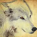 Grey Wolf Art by Steve McKinzie