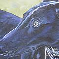 Greyhound by Lee Ann Shepard