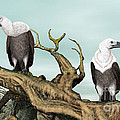Griffon Vultures by Walter Colvin
