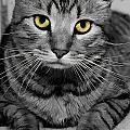 Handsome by Joyce Baldassarre