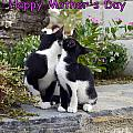 Happy Mother's Day by John Chatterley