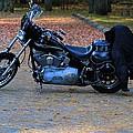 Harley by Dan Sproul