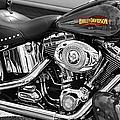 Harley Davidson by Laura Fasulo