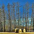 Hay Bails by Randy Harris