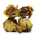 Heap Of Wilted Roses by Bernard Jaubert