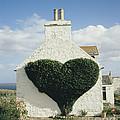 Heart-shaped Ivy Vine by David Parker