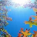 Hello Autumn by CML Brown