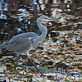 Heron On The River by Four Hands Art