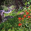 High Country Wildflowers 2 by Lynn Bauer
