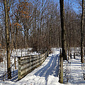 Hiking Trail Bridge With Shadows 3 by Mary Bedy