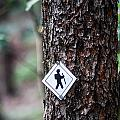 Hiking Trail Sign On The Forest Paths by Alex Grichenko