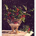 Holly And Berries by Amanda Elwell