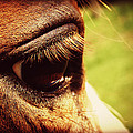 Horse Eye by Cassie Peters