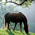 Horse by Hans Reinhard