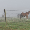 Horse Pasture by Paulette B Wright