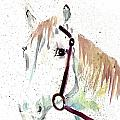 Horse Study by Steven Schultz