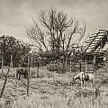 Horses And Barn by Floyd Morgan Jr