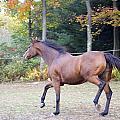 Horses by Armani Ballesteros