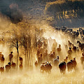 Horses by Hua Zhu