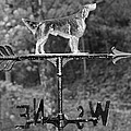 Hound Dog Weather Vane by Dan Sproul
