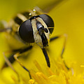 Hover Fly by Andrew James