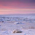Hudson Bay Landscape by Don Johnston