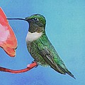 Hummingbird by Paul Wilford