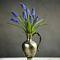 Hyacinth Still Life by Nailia Schwarz