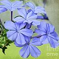 I Love Blue Flowers by Sabrina L Ryan