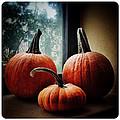 I Love Pumpkins by Natasha Marco