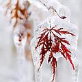 Icy Winter Leaf by Elena Elisseeva