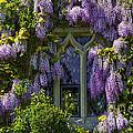 In Bloom by Svetlana Sewell