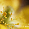 Inside The Poppy by Darren Fisher
