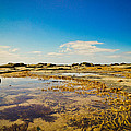 Inverloch Beach by Carley Payne