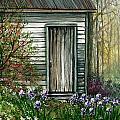 Iris By Barn by Steven Schultz