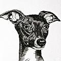 Italian Greyhound by Susan Herber