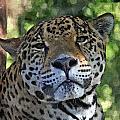 Jaguar 2 by Barry Spears