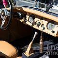 Jaguar by Carol Ailles