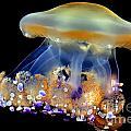 Jellyfish by Wernher Krutein