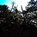 John Muir Trail by Brian Williamson