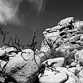 Joshua Tree 2 by Alex Snay