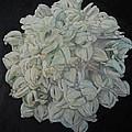 Joshua Tree Bloom Mandala by Sandra Lytch