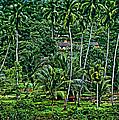 Jungle Life by Steve Harrington