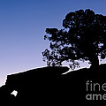 Juniper Tree At Dawn by John Shaw