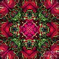 Kaleidoscope Made From An Image Of A Coleus Plant by Amy Cicconi