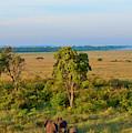 Kenya, Maasai Mara, Hot Air Ballooning by Bill Bachmann