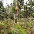 Kigali Genocide Memorial Garden by Paul Weaver