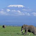 Kilimandjaro by Gerard Lacz