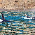 Killer Whale by Richard Jack-James