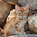 Kitten In Hydra Island by George Atsametakis